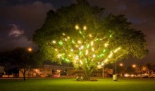 Mark Handforth, Electric Tree, 1998-2001, Florescent Light fixtures, Dimensions variable, Collection of the Museum of Contemporary Art, North Miami, Gift of the Artist