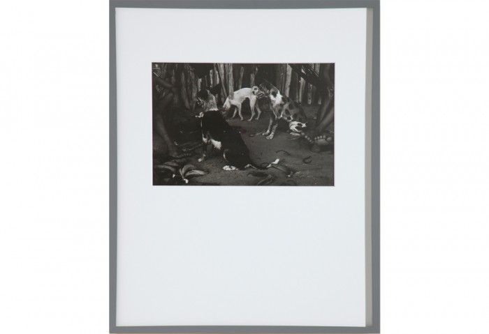<i>Land of the Silent Dogs</i>, 1978<br>Silver gelatin print, 9 1/2 x 13 1/2 inches (24.13 x 34.29 cm)<br>Gift of Dennis and Debra Scholl