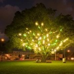 Electric Tree, 1998-2001Florescent light fixtures, dimensions variableGift of the Artist